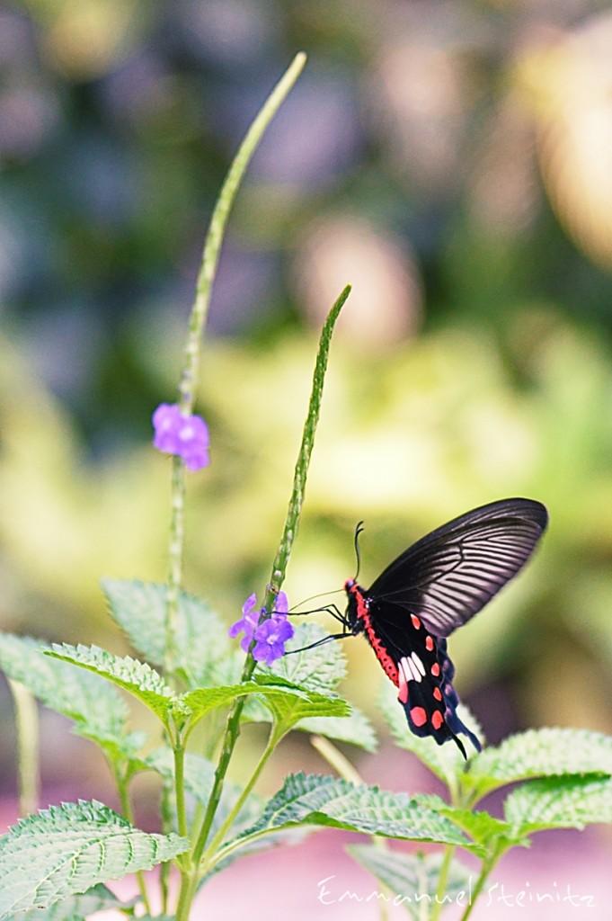 butterfly_botanic_garden